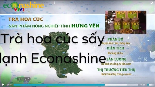 hoa-cuc-econashine-nong-nghiep-sach